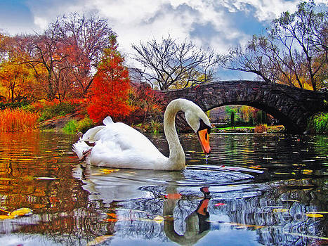 White Swan under Bridge by Nishanth Gopinathan