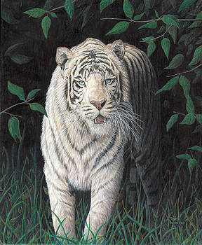 White Tiger Black Night by Marshall Bannister
