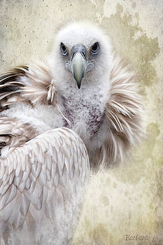 Barbara Orenya - White Vulture
