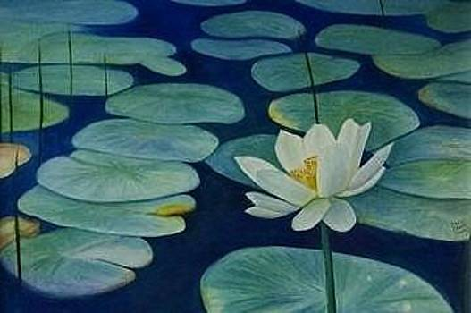 White Water Lily by Carol Oberg Riley