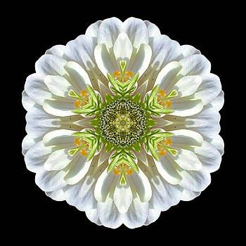 White Zinnia Elegans II Flower Mandala by David J Bookbinder