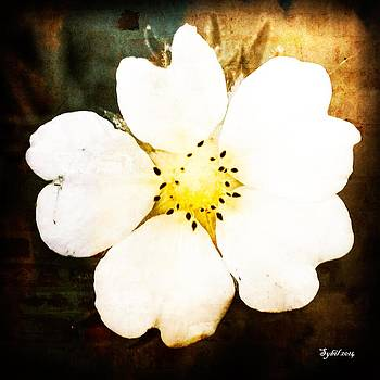 Whiteheart Wildflower by Sybil Conley