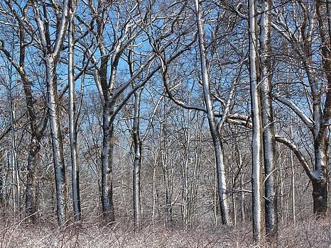 Rosanne Jordan - Whitewashed Trees