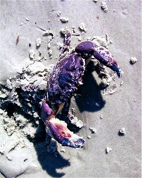 Who's Crabby by James McAdams