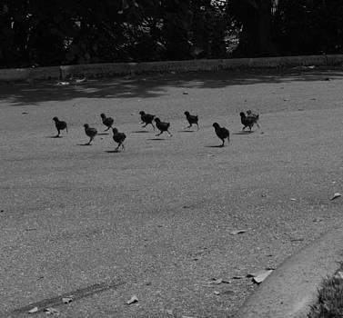 Why did the Chicken Cross the Road by Susan Sidorski