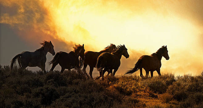 Wild And Free Into The Sunset by Robin  Wadhams