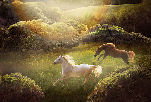 Wild and Free by Melinda Hughes-Berland