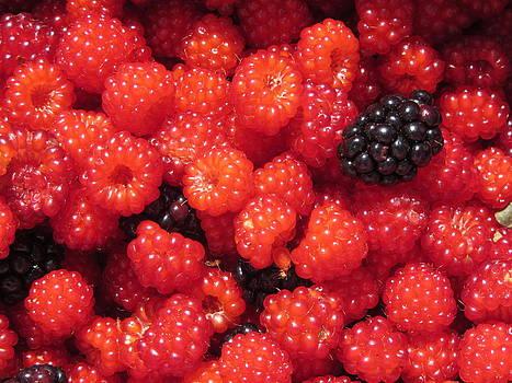 Wild Berries by Christine Bradley