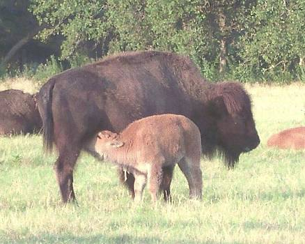 Wild Buffalo and Baby by Rosalie Klidies