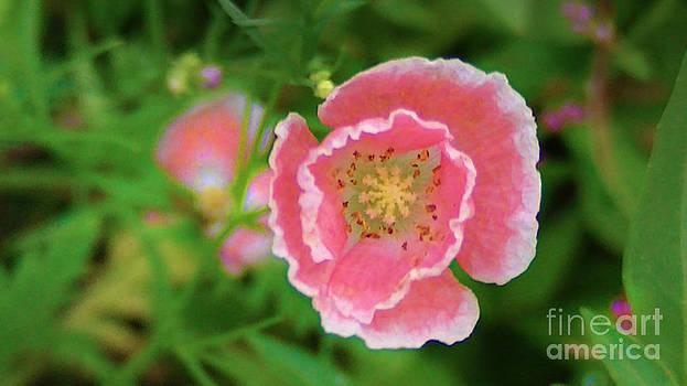 Wild Flower by Brittany Perez