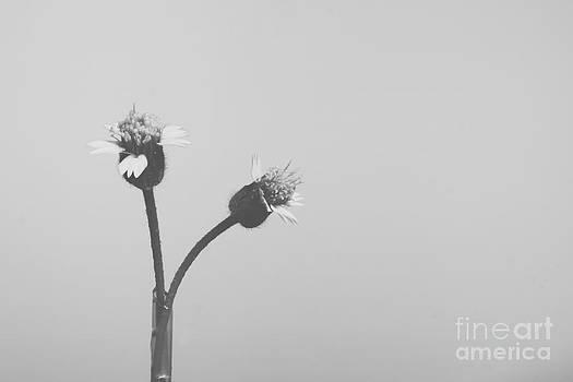 Wild flower by Hardi Saputra