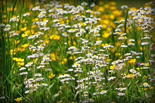 Wild Flowers by Carolyn Ricks