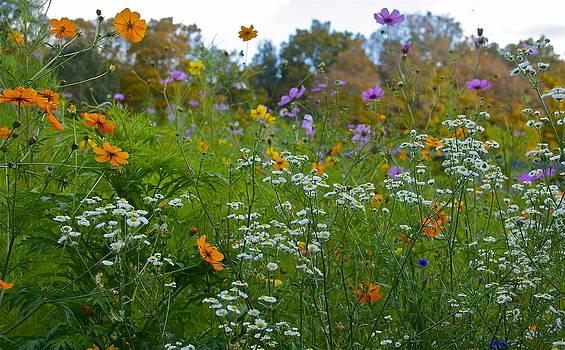 Wild Flowers by Chris Burke