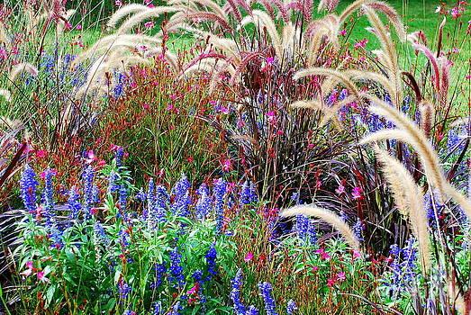Joe Cashin - Wild flowers from Hungary