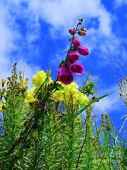 Joe Cashin - Wild flowers