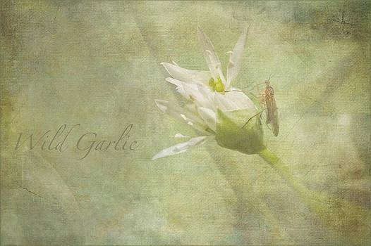 Liz  Alderdice - Wild Garlic