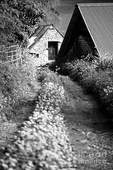 Anne Gilbert - Wild Garlic Track