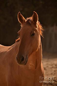 Heather Kirk - Wild Horse Portrait  Brighter