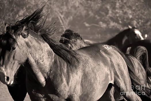 Heather Kirk - Wild Horse Stampede  Brown Tone