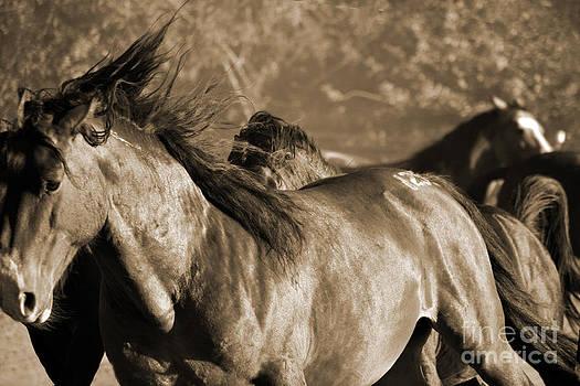 Heather Kirk - Wild Horse Stampede  Sepia