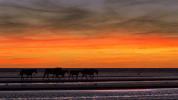 Wild Horses by Alfredo Rougouski