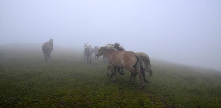 Wild horses in the mist by Ivelina Angelova