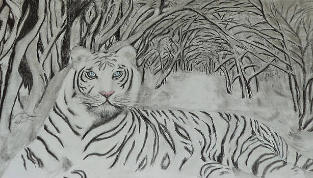 Wild Life by Bindu N
