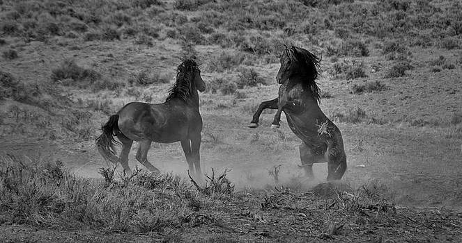 Wild Mustangs by Stephanie Thomson
