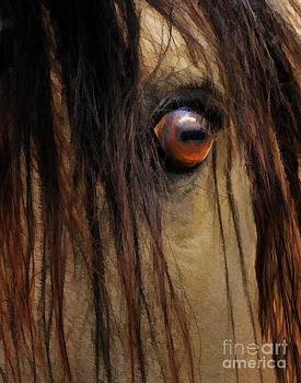 Wild Spirit by Melinda Hughes-Berland