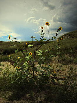 Joyce Dickens - Wild Sunflowers At Paint Mines