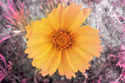 Wild yellow flower by Cosmin Bicu
