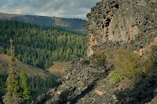 Wildcat Creek Washington USA by Emelyn McKitrick