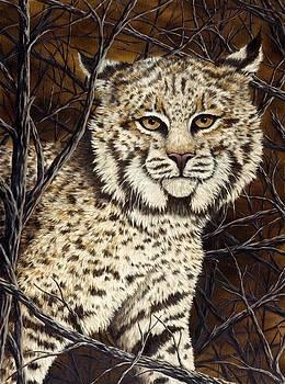 Wildcat by Rick Bainbridge