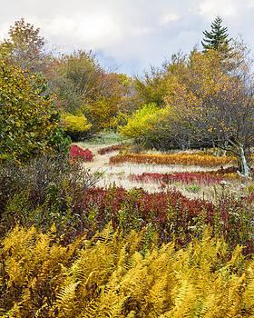 Wilderness Garden Dolly Sods West Virginia by Bill Swindaman