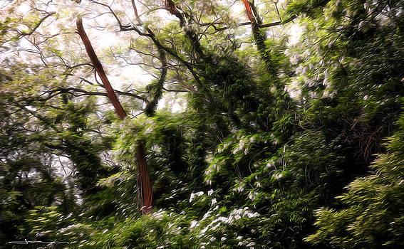 Wilderness Springtime by Jens Tischer