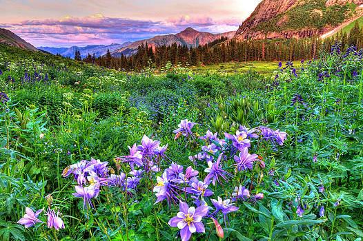 Wildflower Valley by Scott Mahon