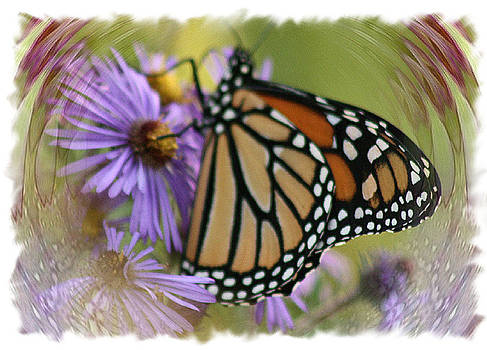 Wildflower Visitor by Sharon McLain