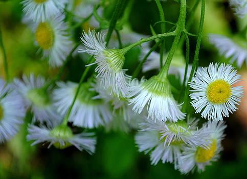 Wildflowers 2 by Leslie Ann Hammer