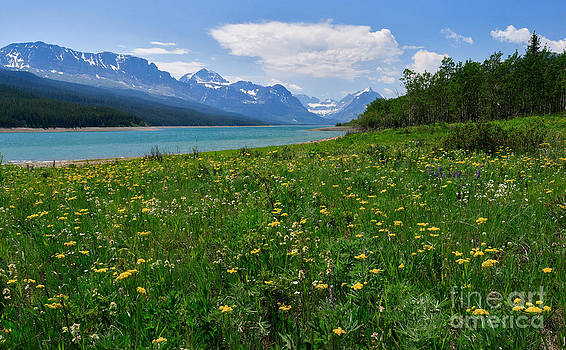 Charles Kozierok - Wildflowers at Lake Sherburne