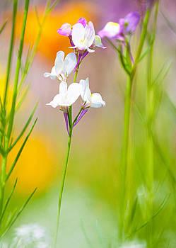 Wildflowers by Bill LITTELL