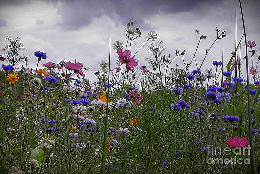Wildflowers by Frances Hodgkins