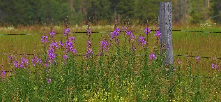Wildflowers by Jennifer Lawrence