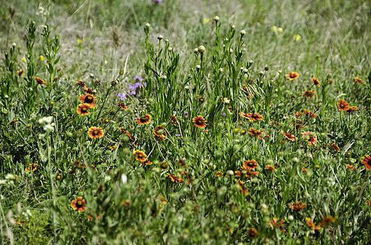 Wildflowers by Leesa Toliver