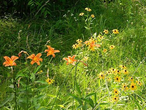 Wildflowers by Linda Brown