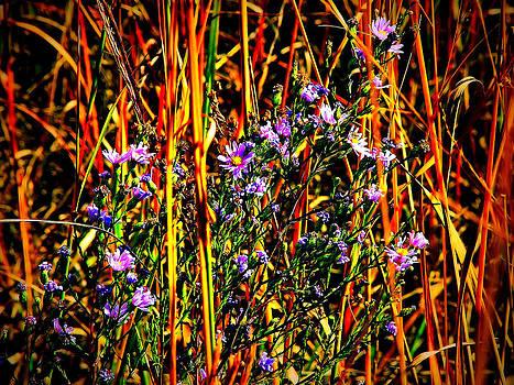 Wildflowers by Slawek Sepko