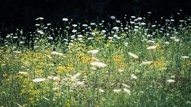 Wildflowers by Sybil Conley