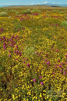 David Zanzinger - Wildflowers Vertical