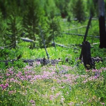 #wildflowers #yellowstone by Sacred  Muse