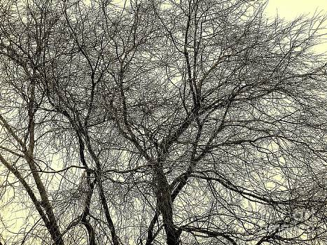 Wiley Tree Black and White by Pete Dionne