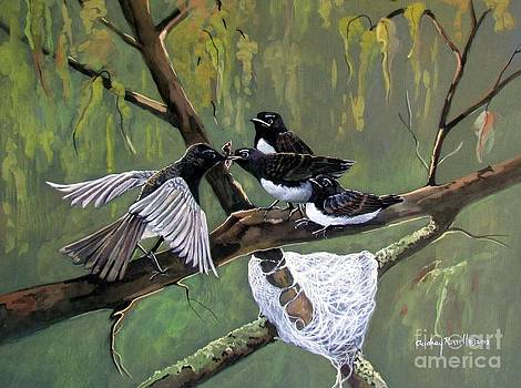 Willie Wagtail female feeding her  chicks       by Audrey Russill